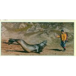 Chine - Carte Postale Leon de Mer en Antarctique - Care - Chinare