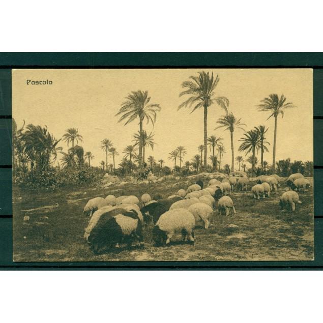 """Libye ca. 1910 - Carte postale """"pâturage"""""""